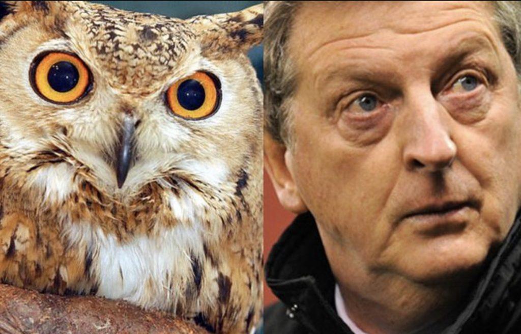 Roy Hodgson Owl Pictures